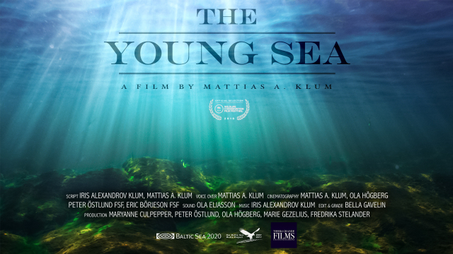 The Young Sea