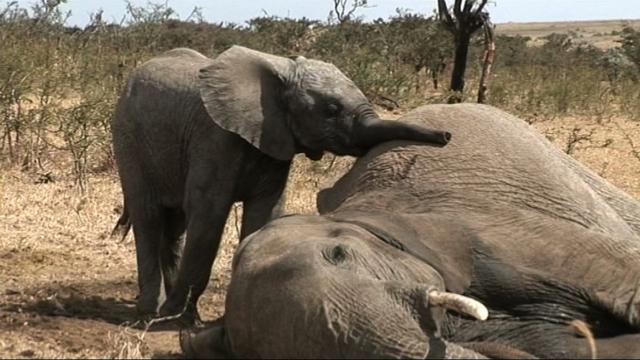 Elephant Refuge