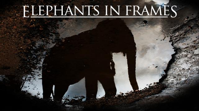 Elephants in Frames