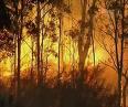 Marysville Fires