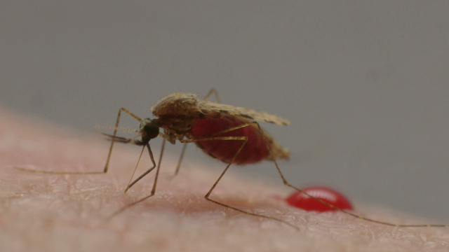 Living With Malaria