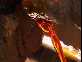 Eco-fuel Kills The Orang-utans