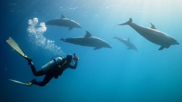 Dolphin Revival