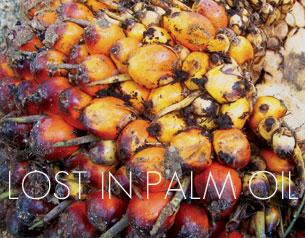 Lost in Palm Oil