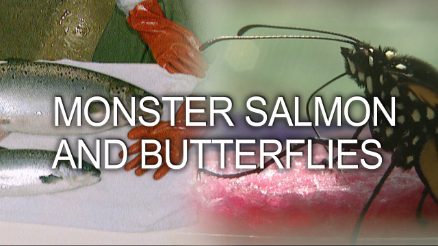 Monster Salmon and Butterflies
