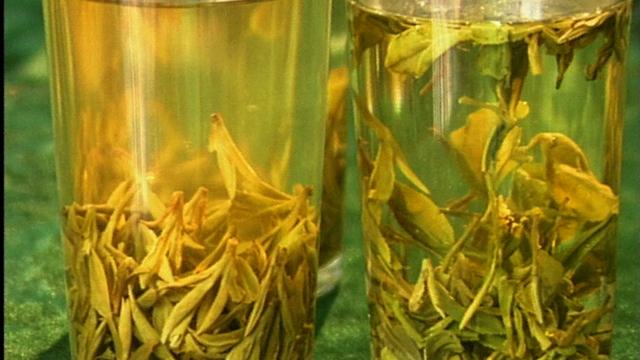 Green Tea: A Brew Of Health