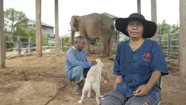 Elephant Lockdown