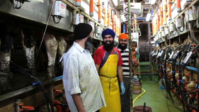Sikh Formaggio